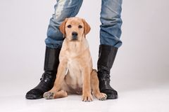 Dog with its master Stock Images