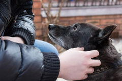 Dog and its owner. Black dog looks at its master who pets it Stock Images