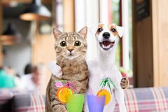 Dog Jack Russell Terrier and cat hugging each other. In the cafe stock image