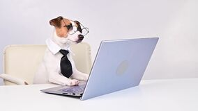 Dog jack russell terrier in glasses and a tie sits at a desk and works at a computer on a white background. Humorous