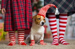 dog Jack Russell Terrier and legs woman and little girl stock photography