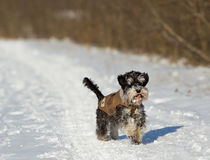 Dog in jacket on snow Royalty Free Stock Photos