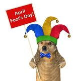 Dog in a jester hat with a sign royalty free stock image