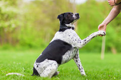 Dog joining the paw to a woman`s hand Stock Photo