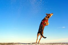 Dog during the jump stock photos