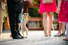 Dog jump for the candy Royalty Free Stock Photo