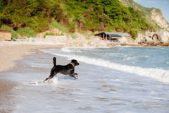 Dog jump into the sea stock images
