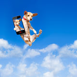 Dog jumping Royalty Free Stock Images
