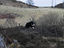 Dog jumping fence Royalty Free Stock Photography