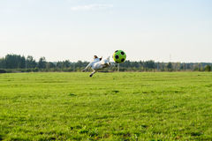 Dog jumping and flying playing with soccer (football) ball Stock Photo