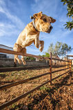 Dog jumping over fence Stock Images