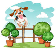 Dog jumping over the fence Royalty Free Stock Image