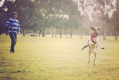 Dog jumping in the park Royalty Free Stock Photography