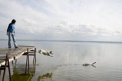 Dog jumping into water Stock Images