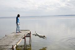 Dog jumping into water Stock Photography