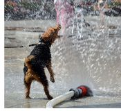 Dog jumping in water Royalty Free Stock Photography
