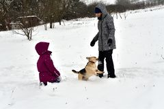 The girl is playing with the dog in the snow and gives him a kiss. The dog jumps for joy at the girl and licks her face stock photos