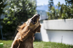Dog jumps Stock Photo