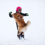 Dog jumps up to a girl and bites in the arm Royalty Free Stock Photo