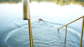 Dog jumps into the water after the toy and floats. stock footage