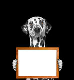 Dog keeps frame in its paws. Isolate on black background royalty free stock photos