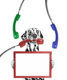Dog keeps frame in its paws and phone in its mouth. Isolated on white background royalty free stock photo