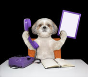 Dog keeps phone and frame Royalty Free Stock Images