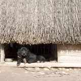 Dog kennel Royalty Free Stock Images
