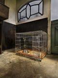 Dog kennel on farm stock photos
