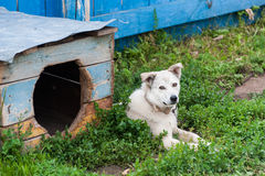 Dog with kennel Royalty Free Stock Photography