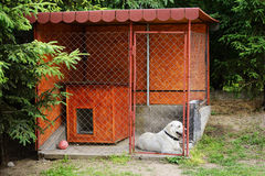 Dog in the kennels Royalty Free Stock Photography