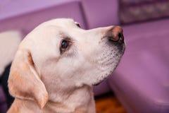 Dog with kind eyes royalty free stock image