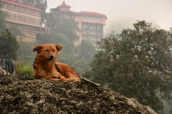 The dog king. On top of the rubble i sit, with not a worry i see,nfor o you distant traveller, why did you take a picture of me Royalty Free Stock Photos