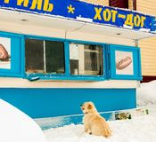 The dog is at the kiosk. A hot dog is asking Stock Images