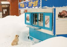 The dog is at the kiosk. A hot dog is asking Stock Photography