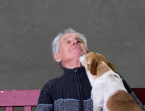 Dog kiss Stock Photography