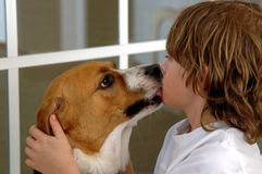 Dog kisses Royalty Free Stock Image