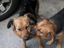 Dog kisses royalty free stock image