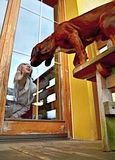 Dog kissing the girl through the window glass