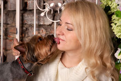 Dog kissing and licking young woman Stock Image