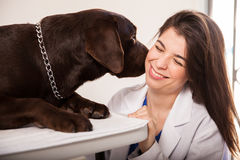 Dog kissing veterinarian Stock Image