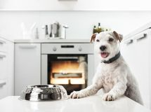 Dog in a kitchen Stock Photos