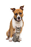 Dog and Kitten. In front of a white background royalty free stock photography