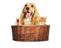Dog and kitten in a basket Royalty Free Stock Photos