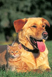 Dog and Kitten Friendship Royalty Free Stock Images