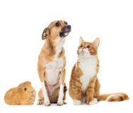 Dog and kitten Stock Photos