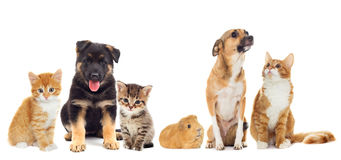 Dog and kitten Stock Image