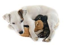 Dog and kitten Stock Photo