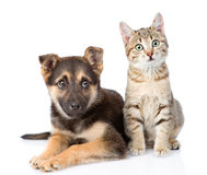 Dog and  kitten. looking at camera on white background Stock Photos
