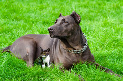Dog and kitten stock photography